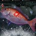 fishhunt